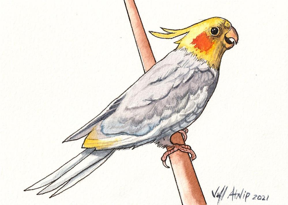 """Cockatiel"" original fine art by Jeff Atnip"
