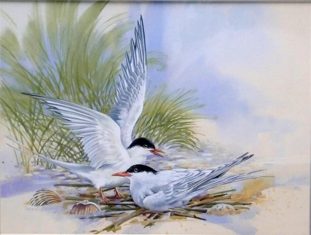 """Arctic Terns, framed"" original fine art by Jean Pierre DeBernay"