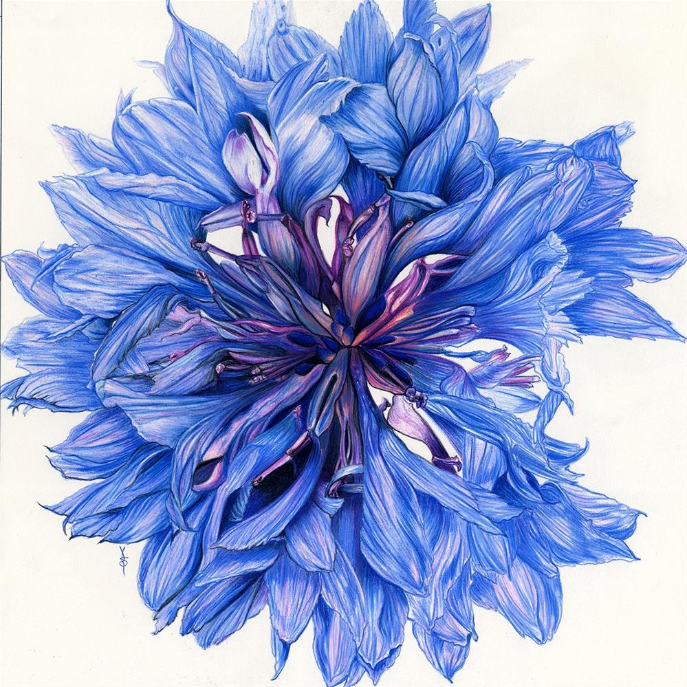 """Cornflower"" original fine art by Valorie Sams"