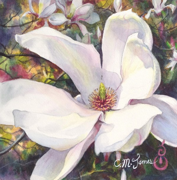 """Magnolia Blossom Opening #1"" original fine art by Catherine M. James"