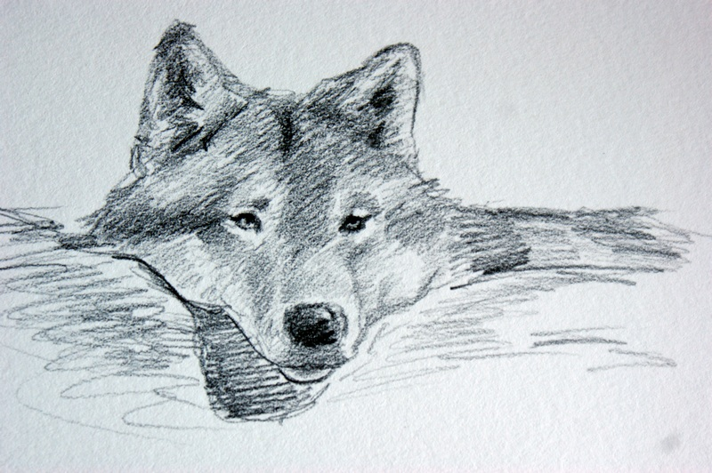"""""""Snuggle, Wolf Study #2"""" original fine art by Crystal Cook"""