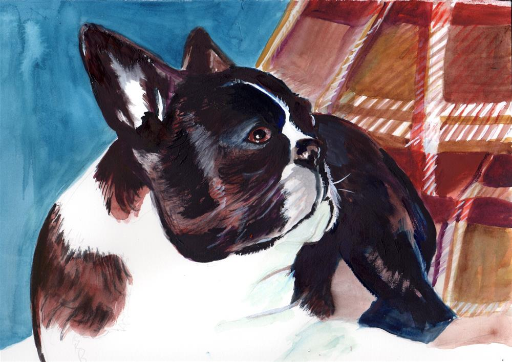"""Boston Terrior"" original fine art by Bunny Griffeth"