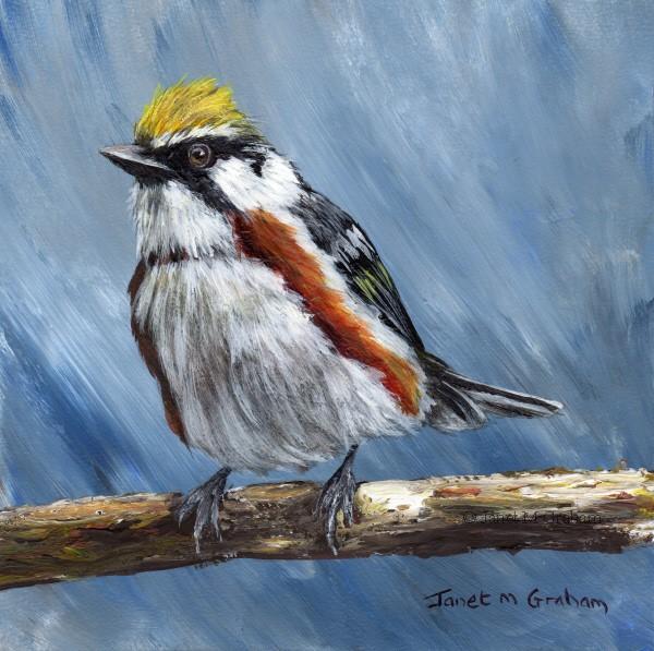"""""""Chestnut Sided Warbler"""" original fine art by Janet Graham"""