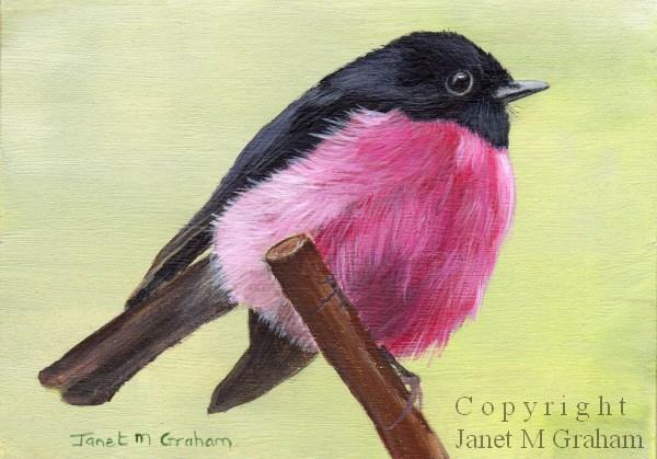 """Pink Robin ACEO"" original fine art by Janet Graham"