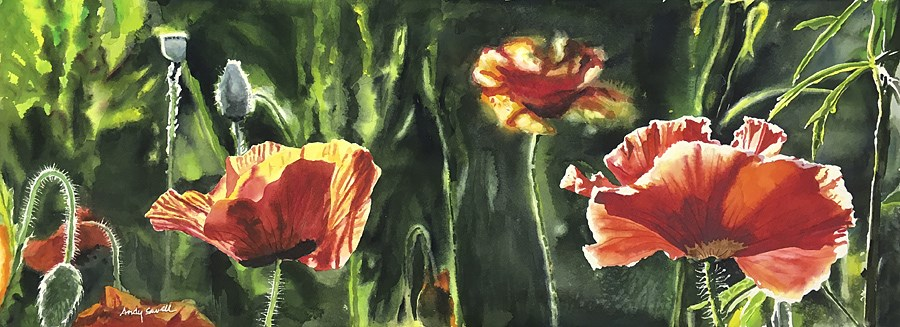 """Poppy Duo"" original fine art by Andy Sewell"