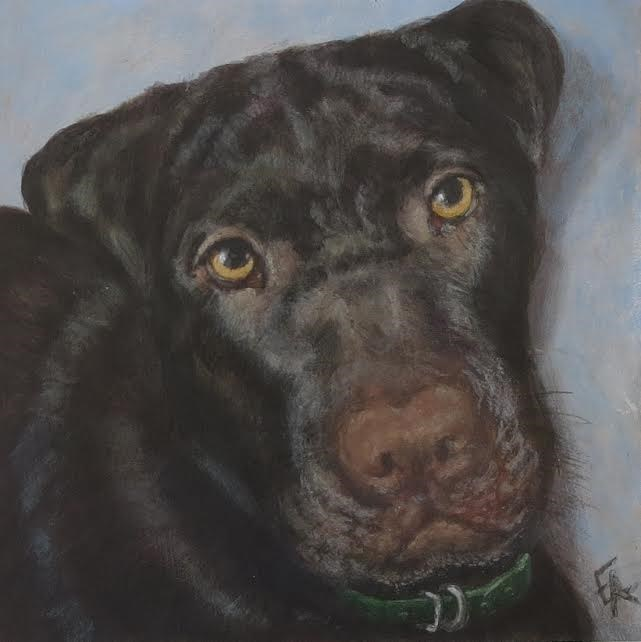 """Koa, R.I.P."" original fine art by Elizabeth Elgin"