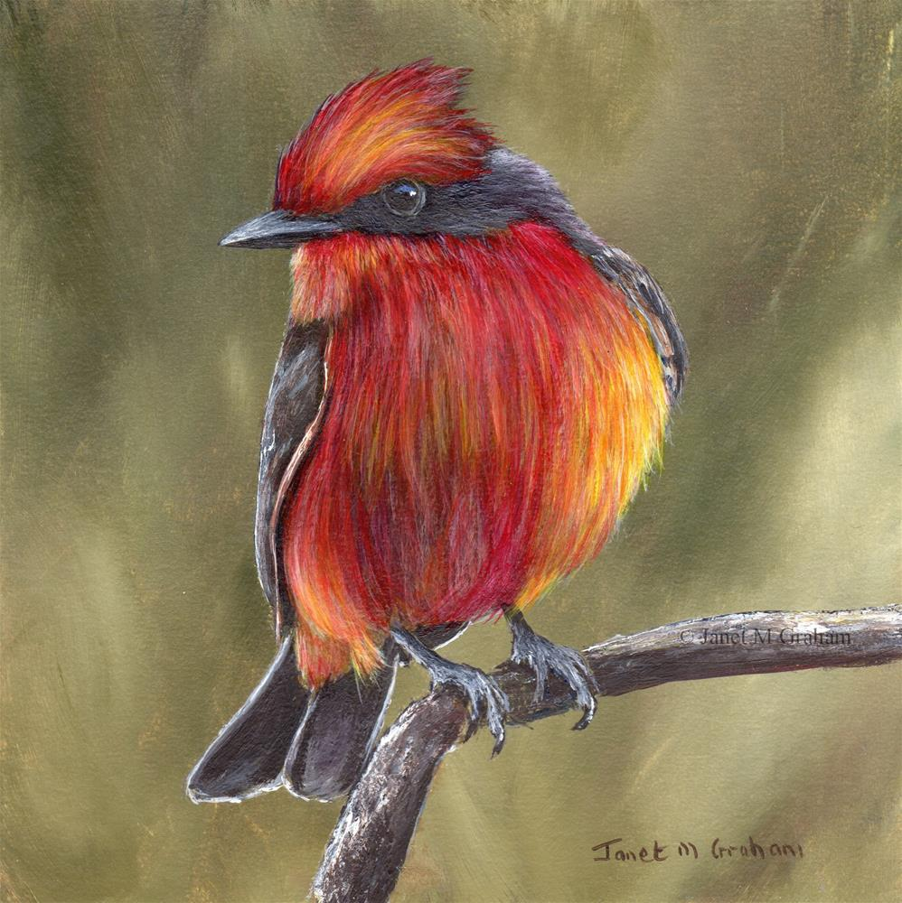 """Vermilion Flycatcher No 3"" original fine art by Janet Graham"