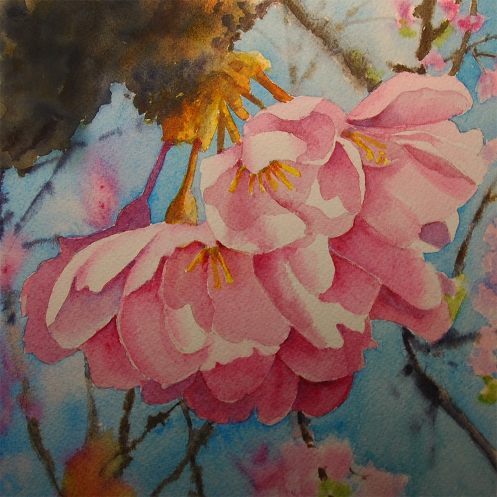"""""""Cherry Blossoms"""" original fine art by Mary Anderson"""