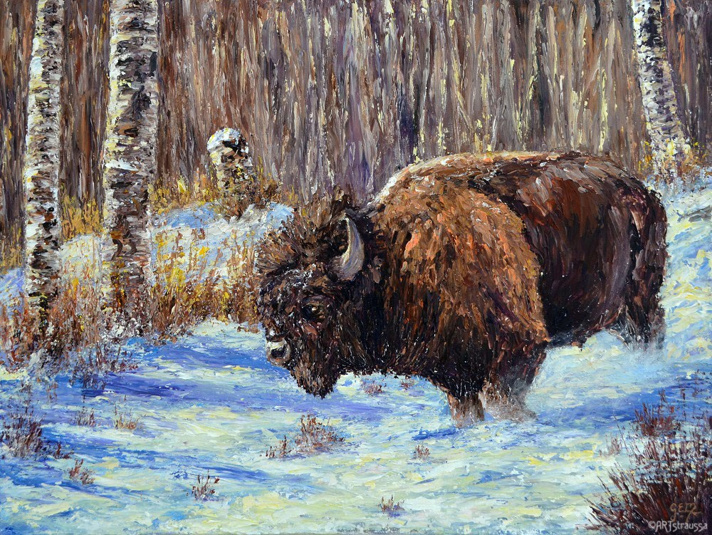 """Bison Winter"" original fine art by Gloria Ester"