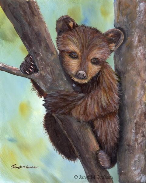 """""""Little Bear Cub"""" original fine art by Janet Graham"""