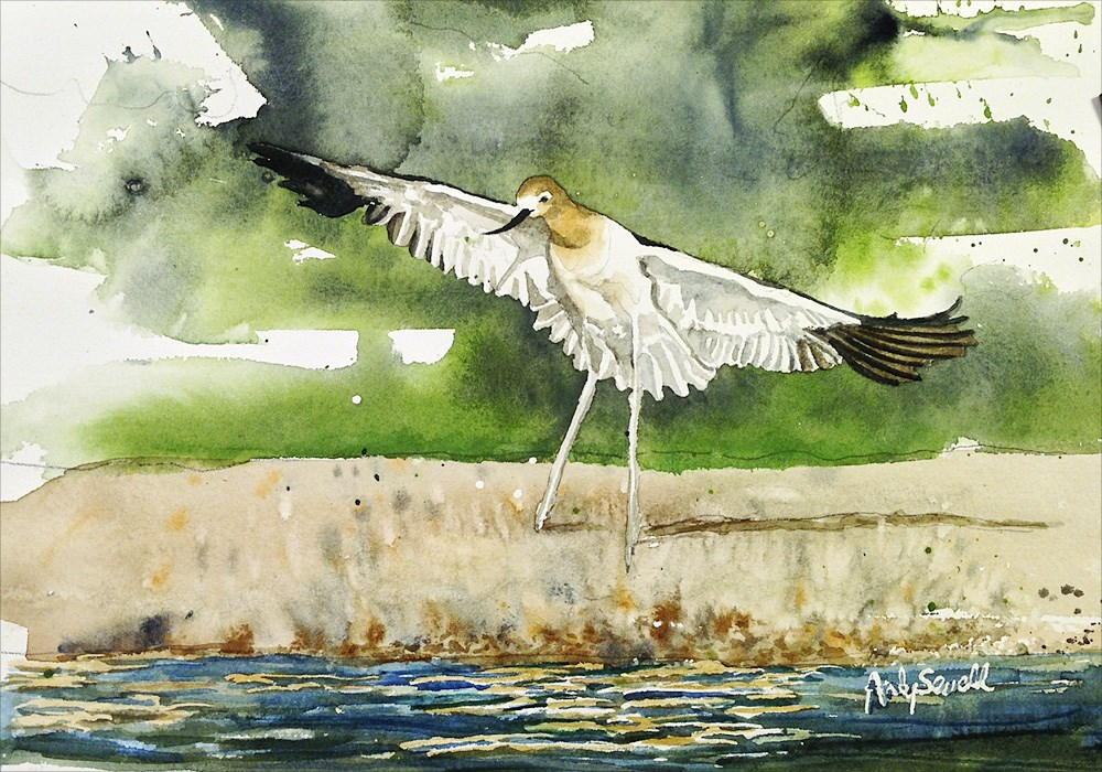 """A is for American Avocet"" original fine art by Andy Sewell"