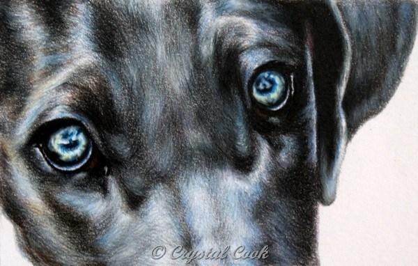 """Icy Eyes"" original fine art by Crystal Cook"