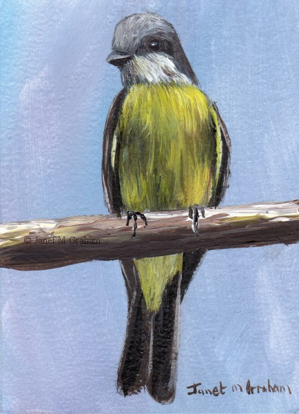 """Tropical Kingbird ACEO"" original fine art by Janet Graham"