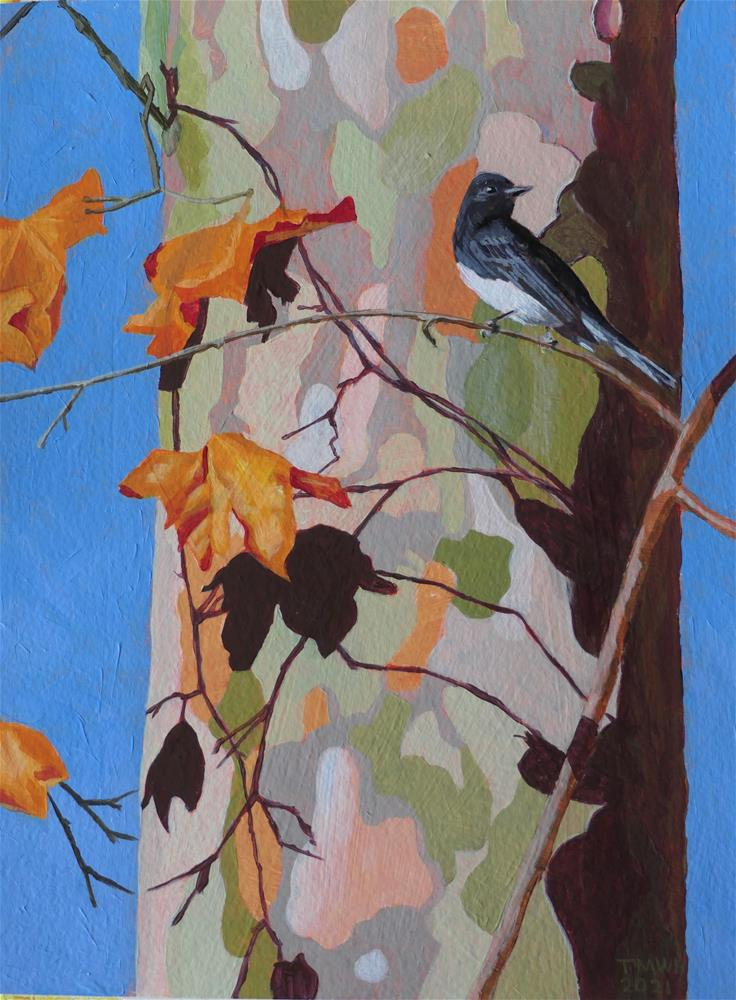 """""""Sycamore with Black Phoebe"""" original fine art by Tracy Hurley"""