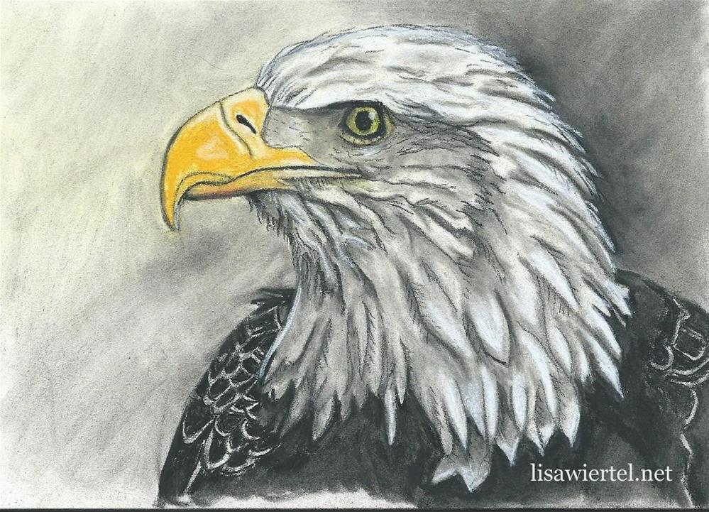 """""""Bald Eagle #1"""" original fine art by Lisa Wiertel"""