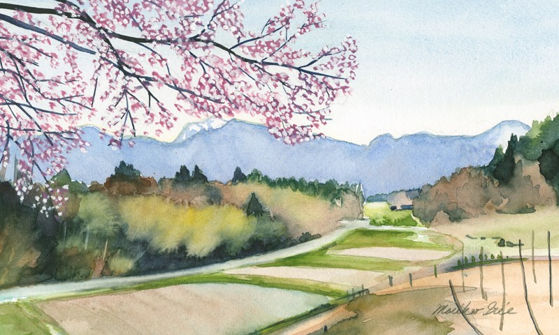 """Cherry Blossoms View"" original fine art by Mariko Irie"