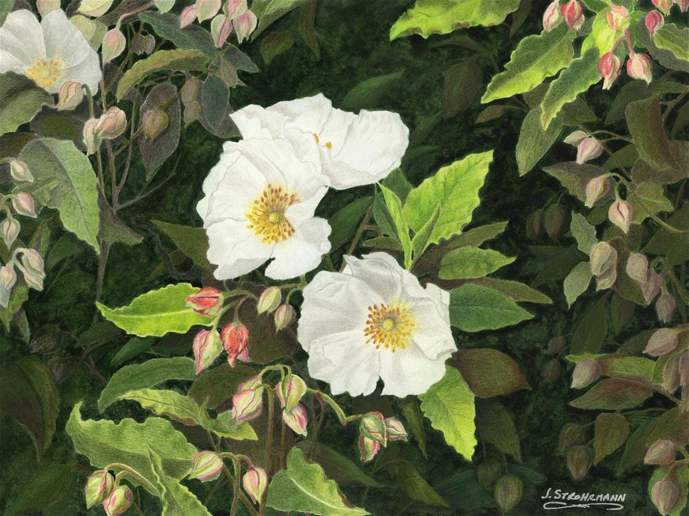 """Rock Roses"" original fine art by Jeanne Strohrmann"