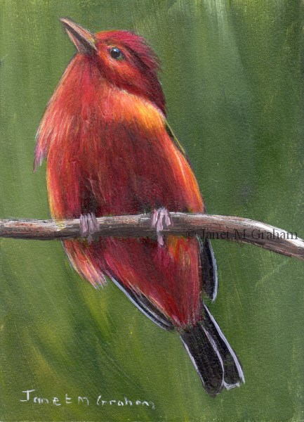 """Summer Tanager ACEO"" original fine art by Janet Graham"