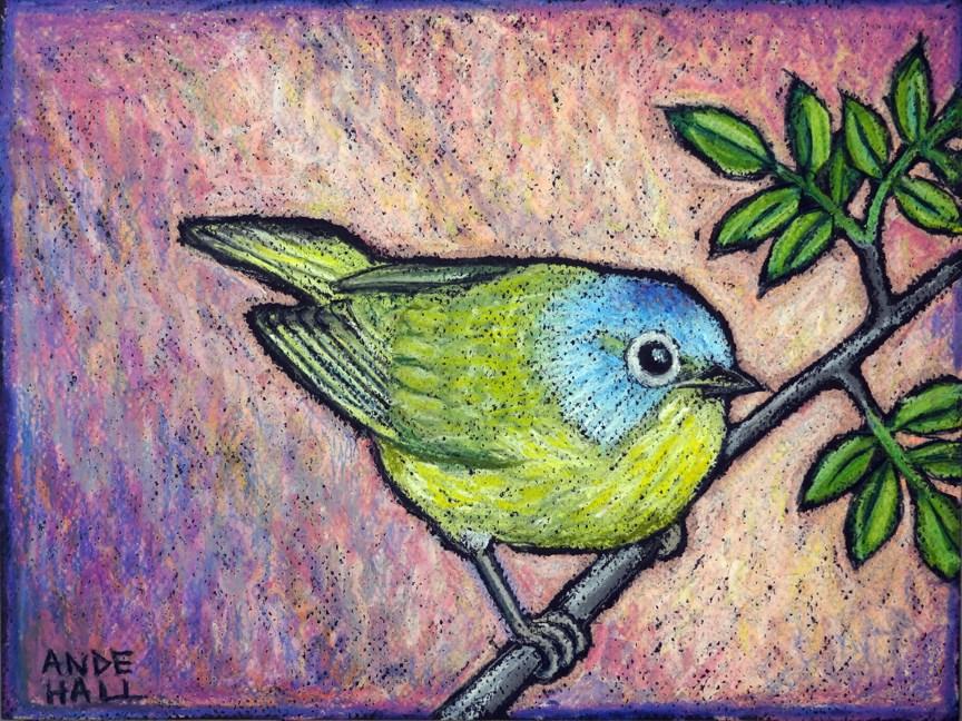"""""""Nashville Warbler"""" original fine art by Ande Hall"""