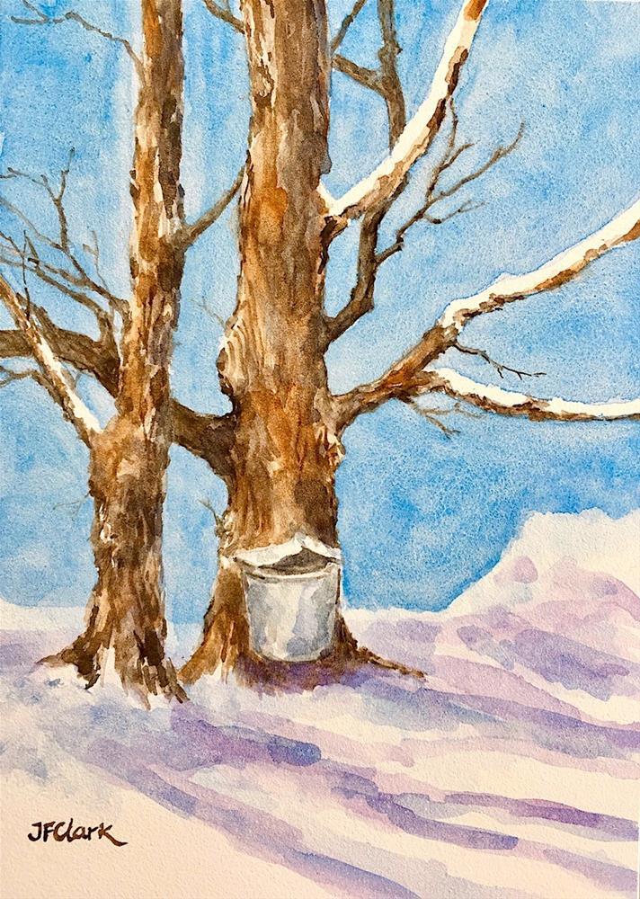"""Maple #1"" original fine art by Judith Freeman Clark"