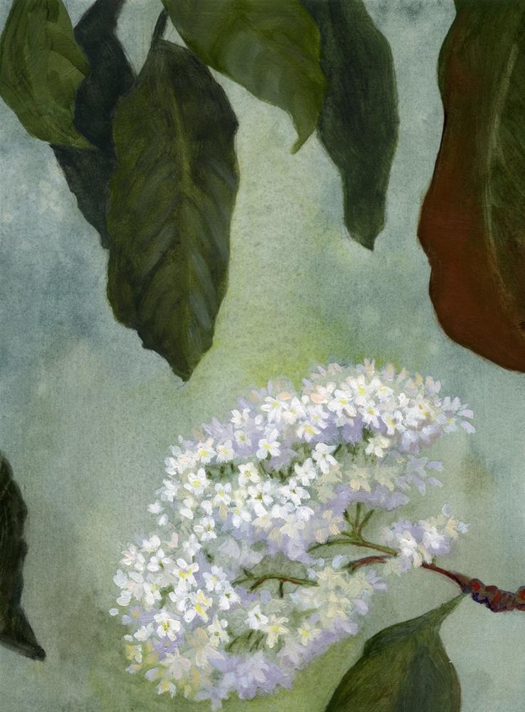 """Chinese Photinia"" original fine art by Robyn Jorde"