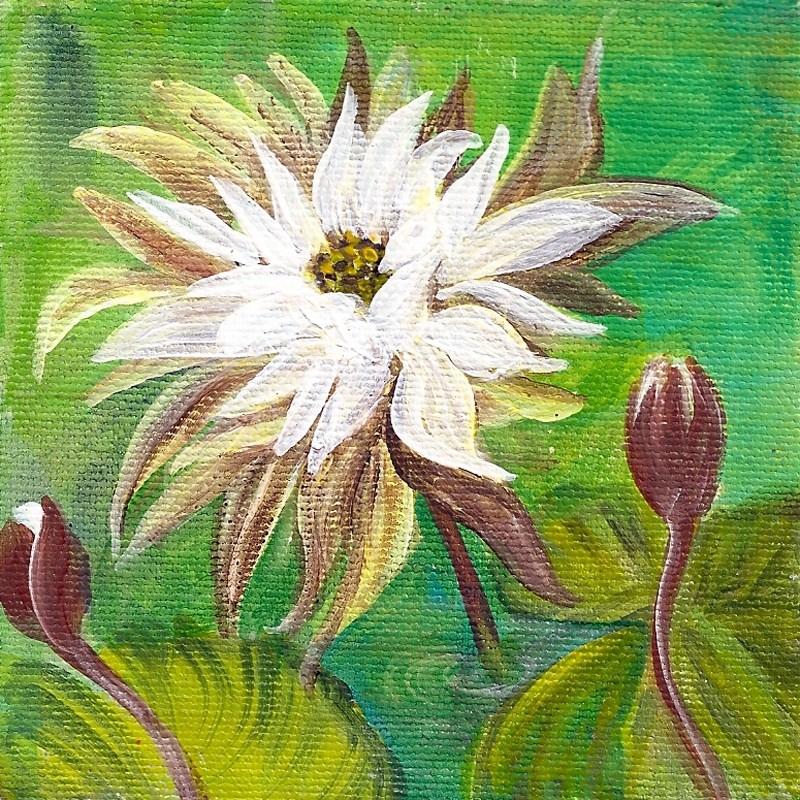 """""""4x4 square edge canvas: Water Lillies"""" original fine art by Penny Lee StewArt"""