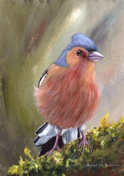 """""""Chaffinch"""" original fine art by Janet Graham"""