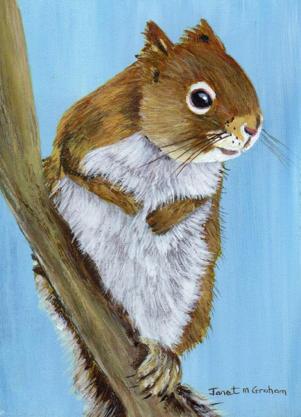 """""""Red Squirrel ACEO"""" original fine art by Janet Graham"""
