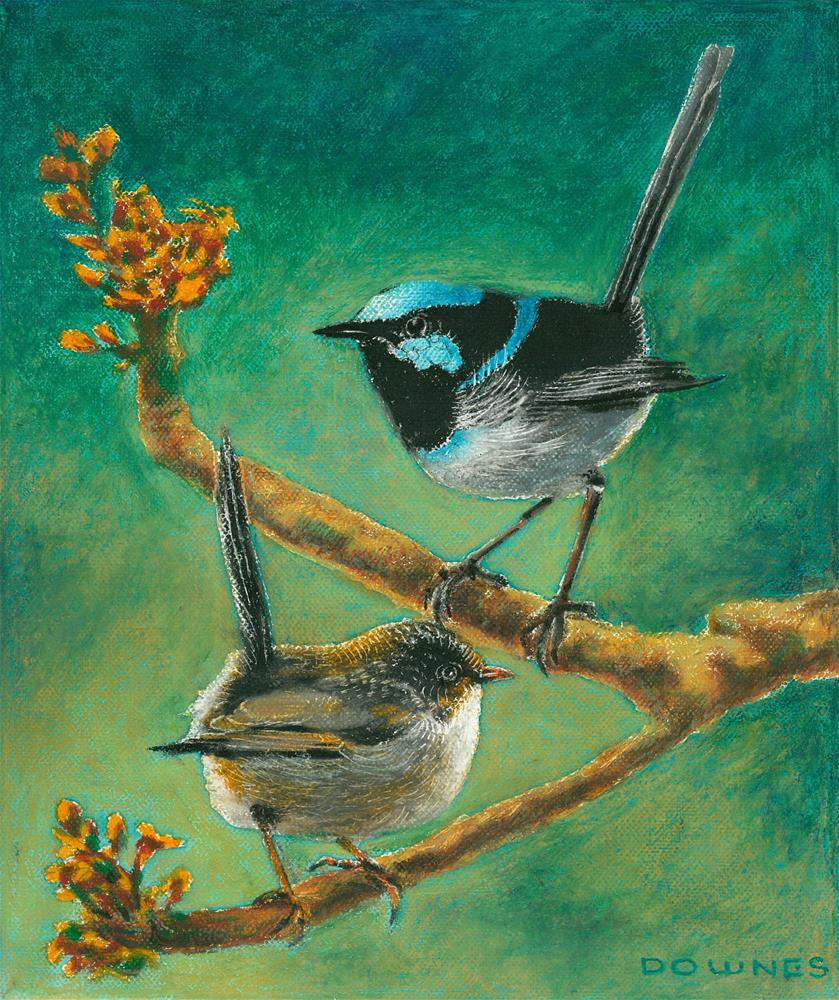 """149 BLUE FAIRY-WRENS"" original fine art by Trevor Downes"