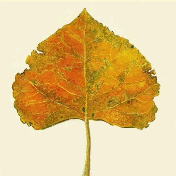 """Autumn Leaf #7 (Cottonwood Yellow)"" original fine art by Carol L Adamec"