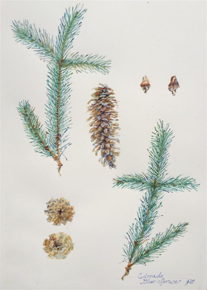 """Colorado Blue Spruce"" original fine art by Jean Krueger"