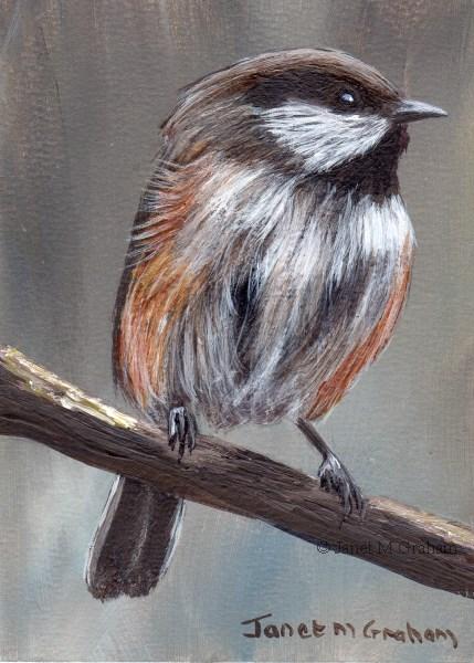 """Boreal Chickadee ACEO"" original fine art by Janet Graham"