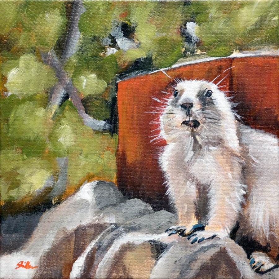 """1533 Prairie Dog"" original fine art by Dietmar Stiller"