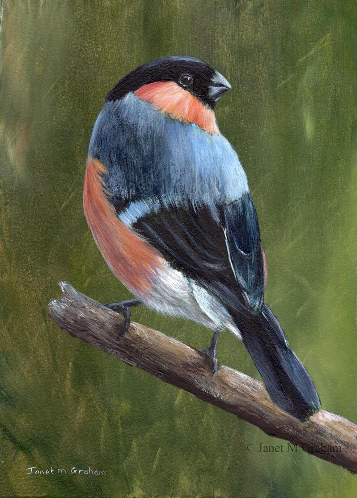 """Bullfinch"" original fine art by Janet Graham"