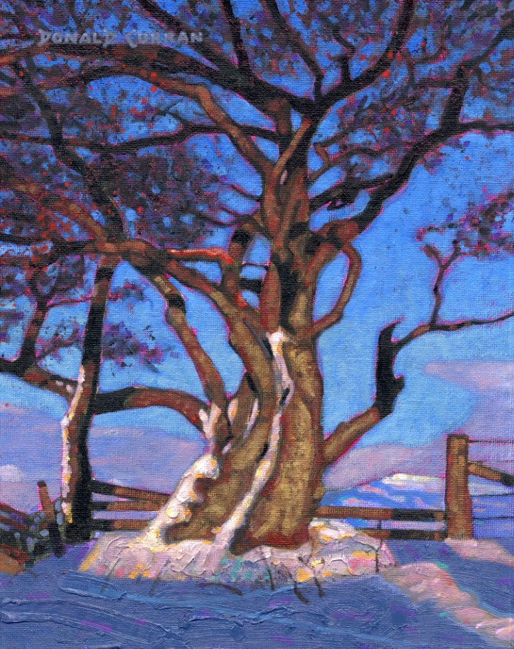 """Tree"" original fine art by Donald Curran"