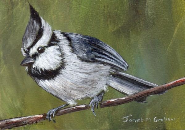 """Bridled Titmouse ACEO"" original fine art by Janet Graham"
