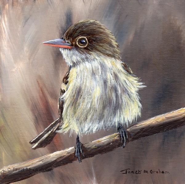 """Acadian Flycatcher"" original fine art by Janet Graham"