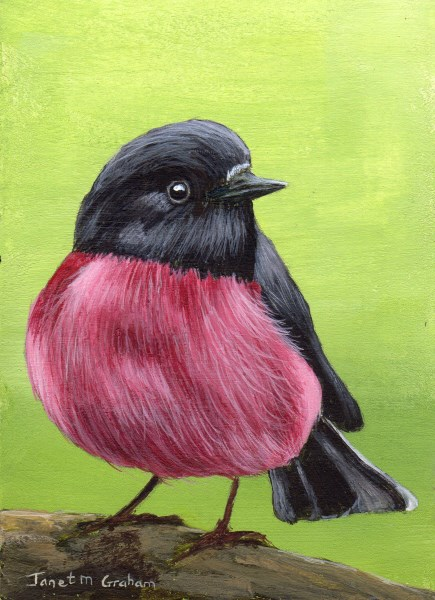 """Pink Robin ACEO"" original fine art by Janet Graham"