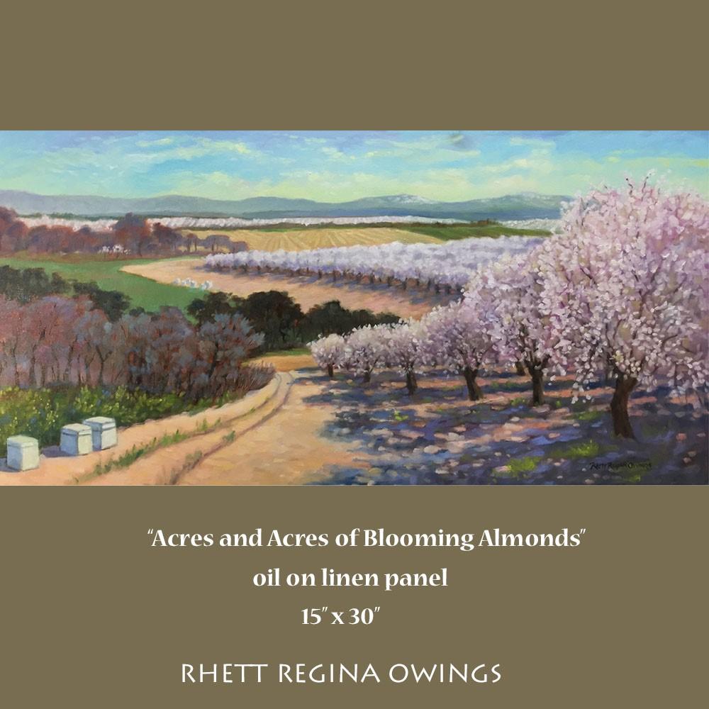 """Acres and Acres of Blooming Almonds"" original fine art by Rhett Regina Owings"