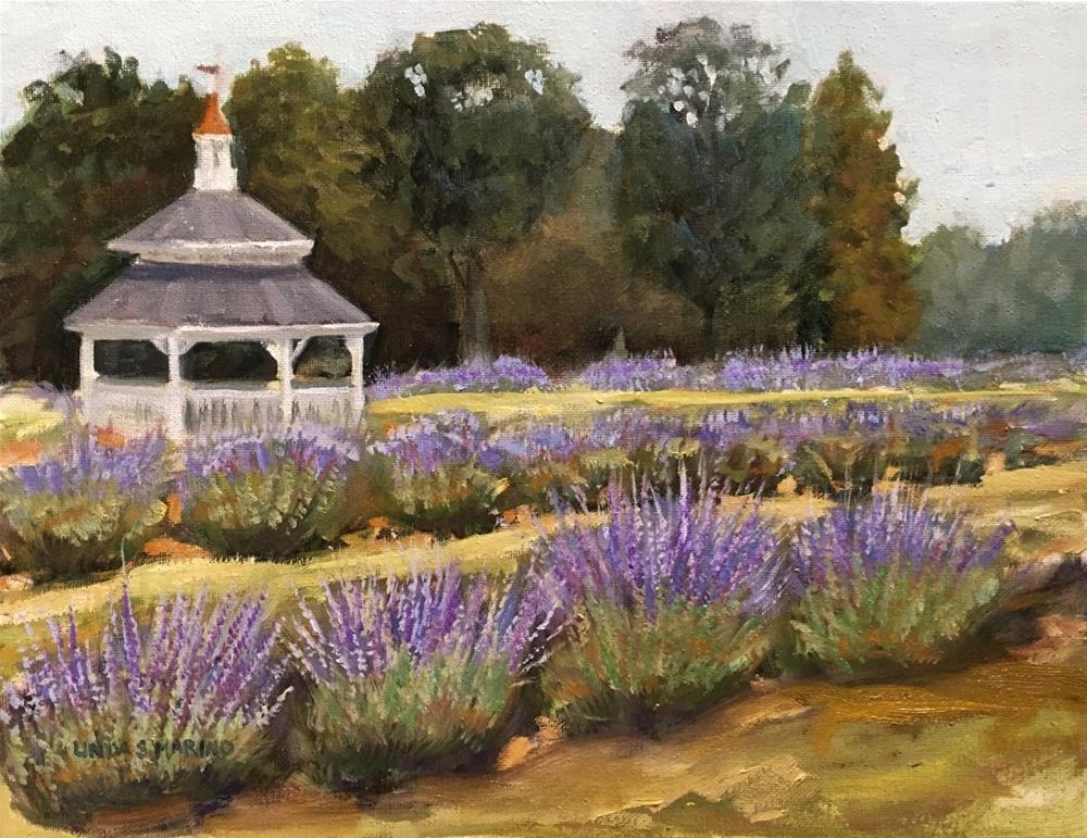 """Peaceful among the Lavender Fields"" original fine art by Linda Marino"