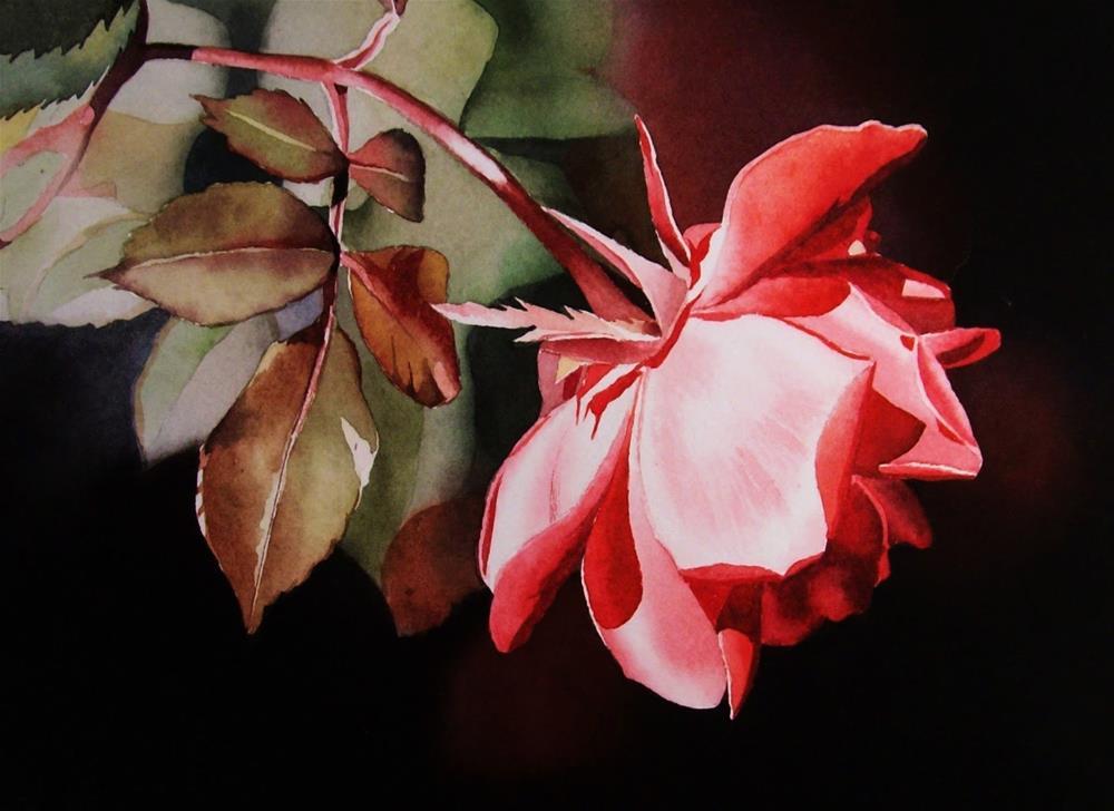 """Coral Rose"" original fine art by Jacqueline Gnott, TWSA, WHS"