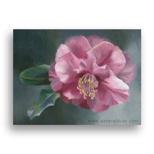 """Morning Camellia"" original fine art by Ester Wilson"