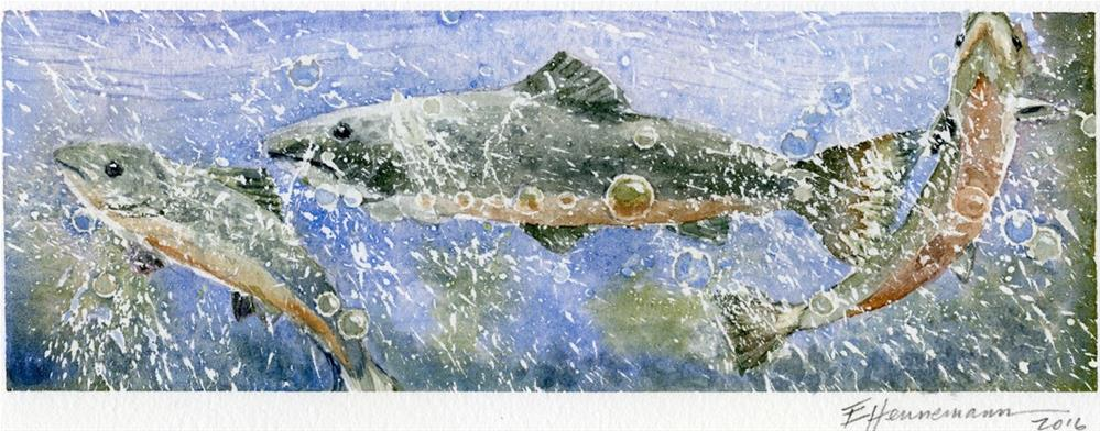 """Three Salmon 