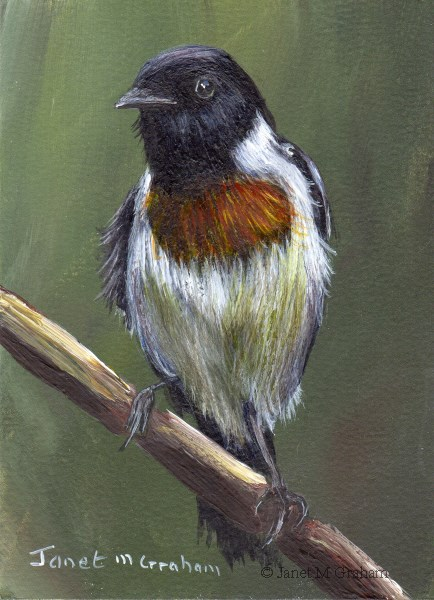 """""""African Stonechat ACEO"""" original fine art by Janet Graham"""