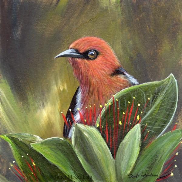 """Scarlet Honeyeater"" original fine art by Janet Graham"