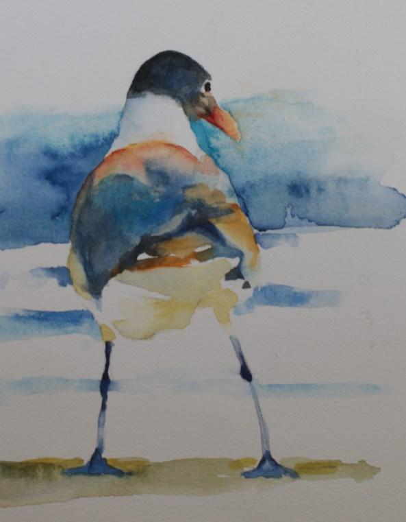 """Laughing Gull Sketch"" original fine art by Sue Churchgrant"