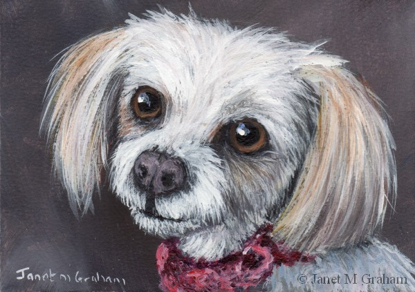 """Bella ACEO"" original fine art by Janet Graham"