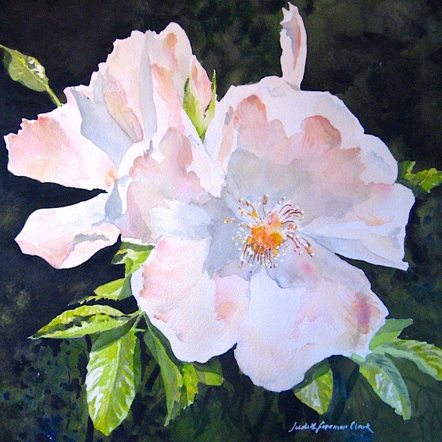"""Blushing Rose"" original fine art by Judith Freeman Clark"