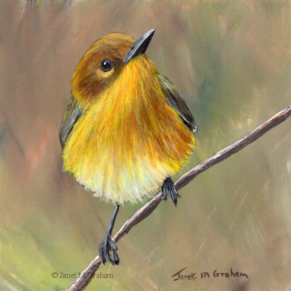 """Prothonotary Warbler"" original fine art by Janet Graham"