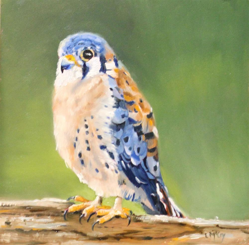 """Kestrel, Bird Oil Painting"" original fine art by Linda McCoy"